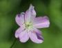 flower3185