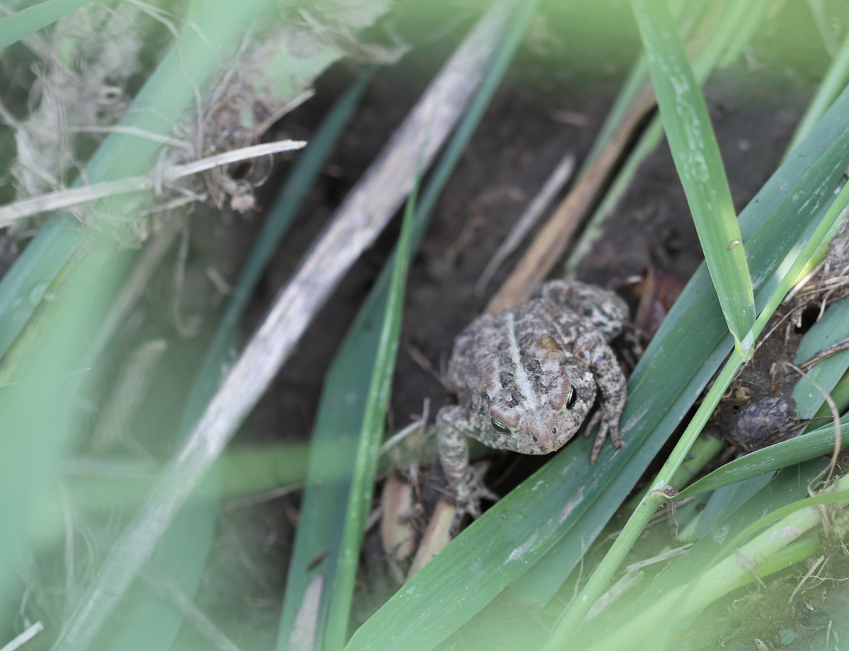frog3190