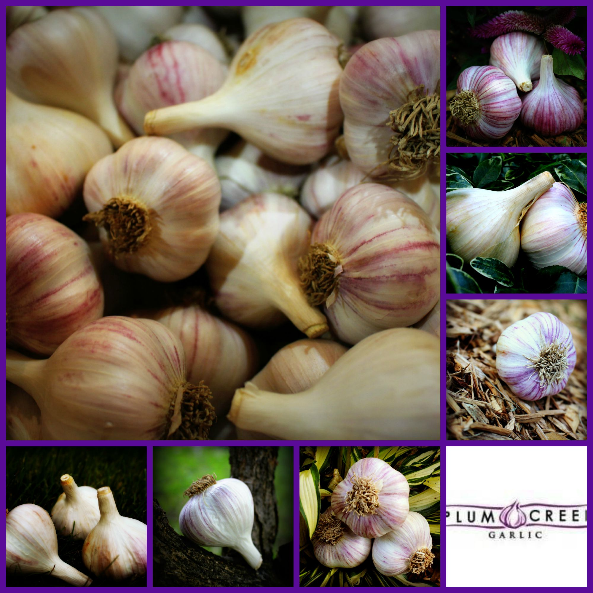 garlic Collage 2